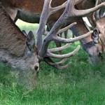 Nationalpark – Akademie – Wild wild sein lassen?