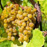 Hasborn: Fahrt zum Weinfest nach St. Martin