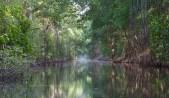 The coroni swamp
