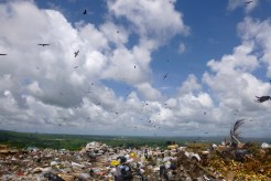 The vultures circling the landfill that was once a pit when Albert was a kid.