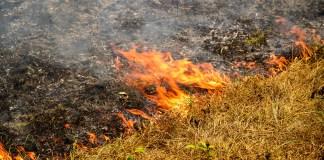 burning laws