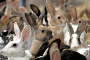 many_rabbits