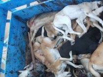 Stadtangestellter von Neuland erschlug 150 Hunde