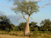 Umweltsekretariat reaktiviert Schutz des Chacos