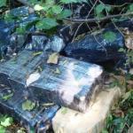Unkraut im Wald vermutet und gefunden
