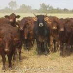 Paraguayisches Rindfleisch geht neue Wege