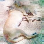 Warum mussten diese Hunde sterben?