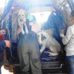 Tierrettung