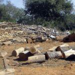 Die Welt verlor 18 Millionen Hektar Wald