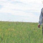 Biologischer Anbau in Paraguay im Aufwärtstrend