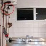Fledermäuse im IPS Krankenhaus