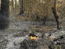 Unkontrollierte Wald- und Wiesenbrände