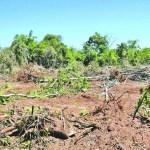 Staatsanwaltschaft ermittelt wegen illegaler Abholzung