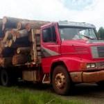 Abholzung und illegaler Holzhandel