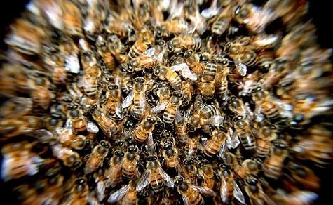 Ein Insektizid, das einige Arten in Paraguay gefährdet