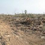 Deutschstämmiger unter dem Verdacht der Abholzung