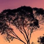 Geld für Waldschutz