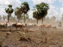 Rechtsstreit über 480.000 ha im Chaco mit politischer Einflussnahme