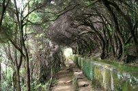Wild verwachsene Levada / Madeira