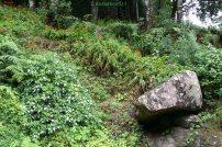 Wald, Farn & Blumen / Madeira