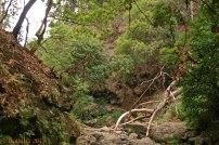 Wildromantischer Wanderweg an einer Levada entlang / Madeira