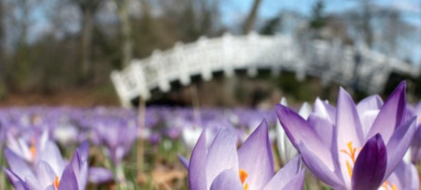 Frühlingserwachen im Wörlitzer Park 2019
