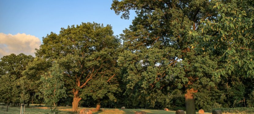Eichenprozessionsspinner im Gartenreich