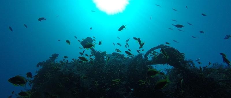 Foto Unterwasserwelt