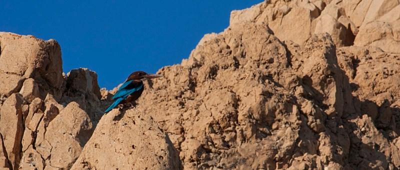 Foto Ein Vogel - in Blau