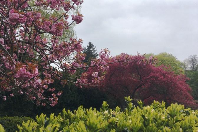Foto Bunte Blüte