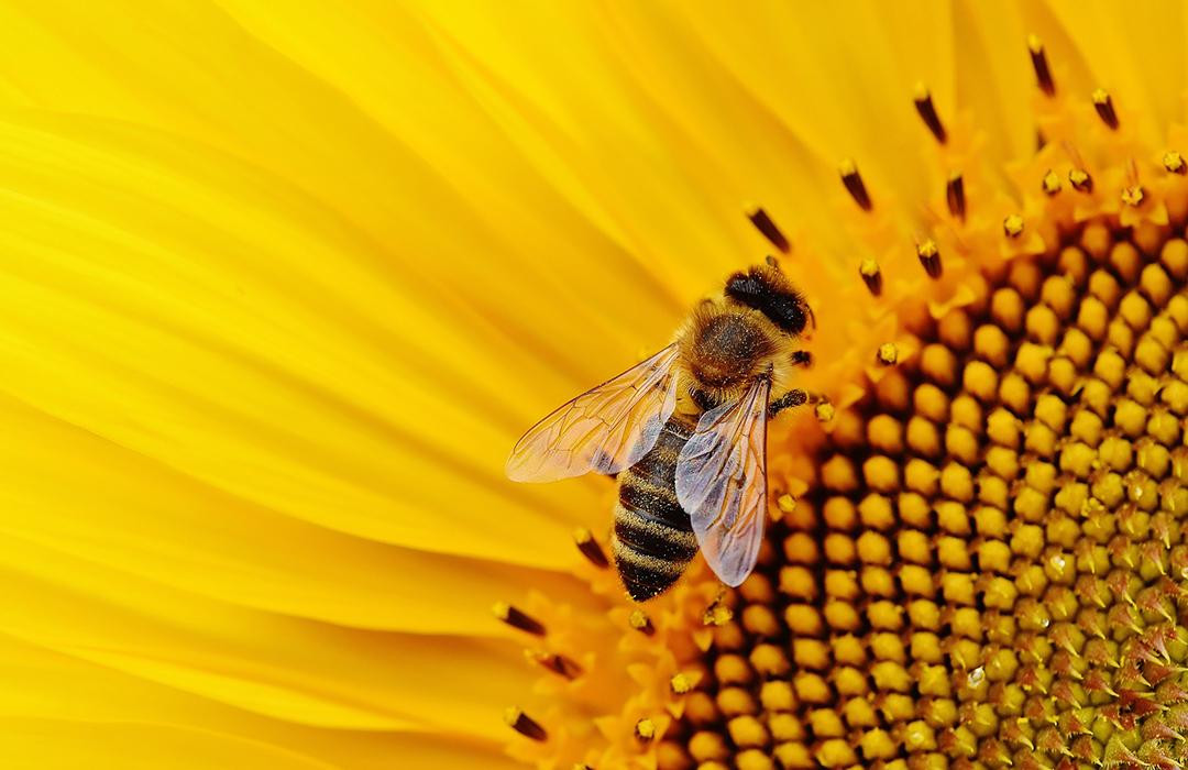 Granjas Solares en México: excelente hogar para las abejas