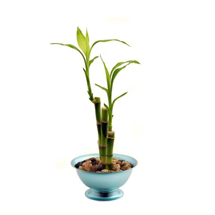 Plantas purificadoras en Wokii