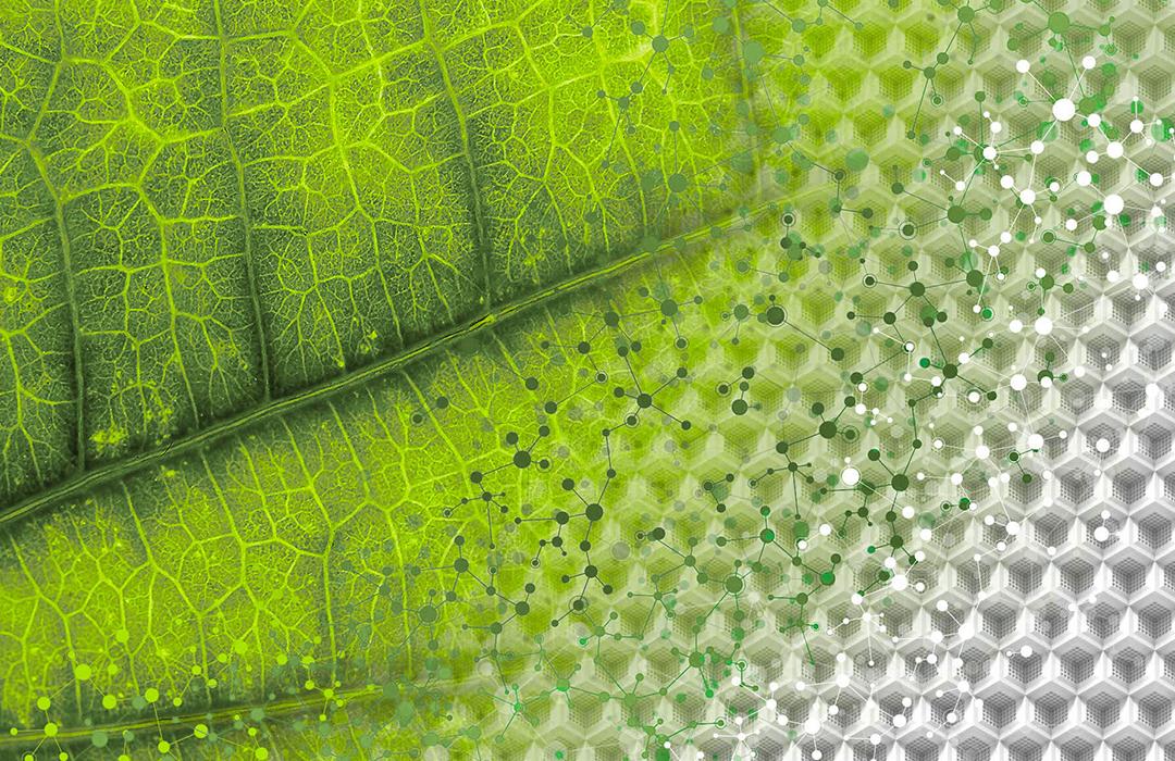 Brightseed: descubriendo supernutrientes escondidos en plantas