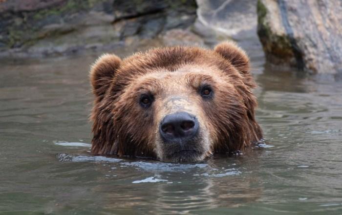 El Zoológico del Bronx te hará sonreír con las fotos de sus integrantes