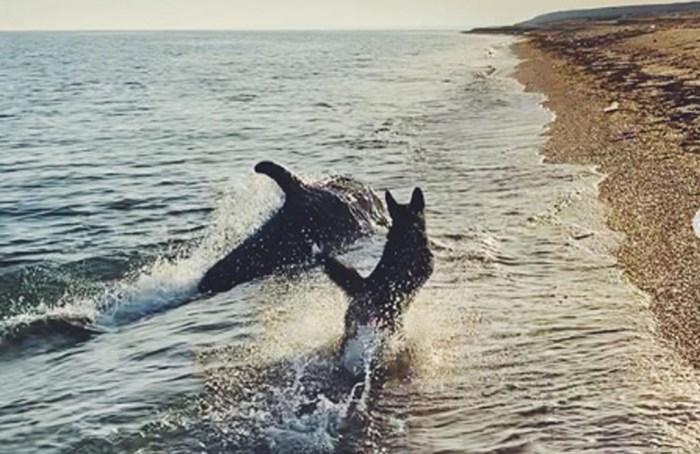 Video: El juego entre un perro y un delfín que se hizo viral