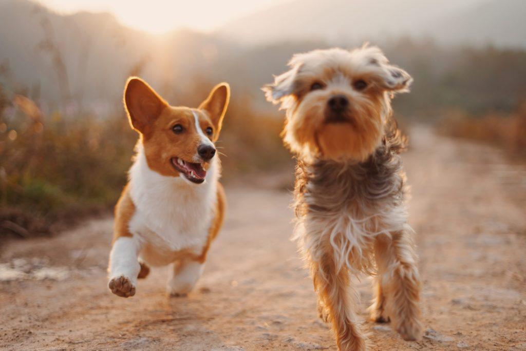 ¡Es hoy! Can Fest 2020: el evento virtual para que adoptes un perro