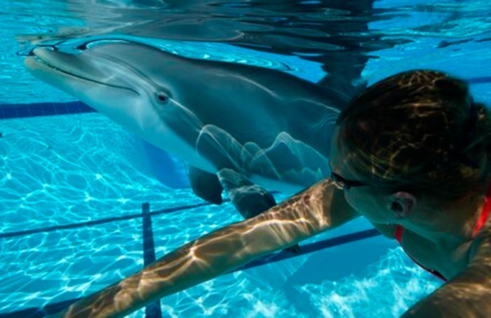 Diseñan un delfín robot para que ya no existan en acuarios