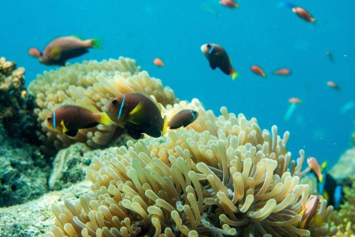Tres destinos para observar vida salvaje de manera responsable