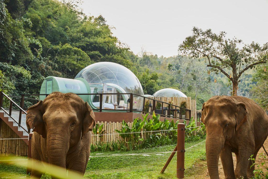 Los elefantes sí tienen memoria, y no olvidan que nos necesitan para sobrevivir