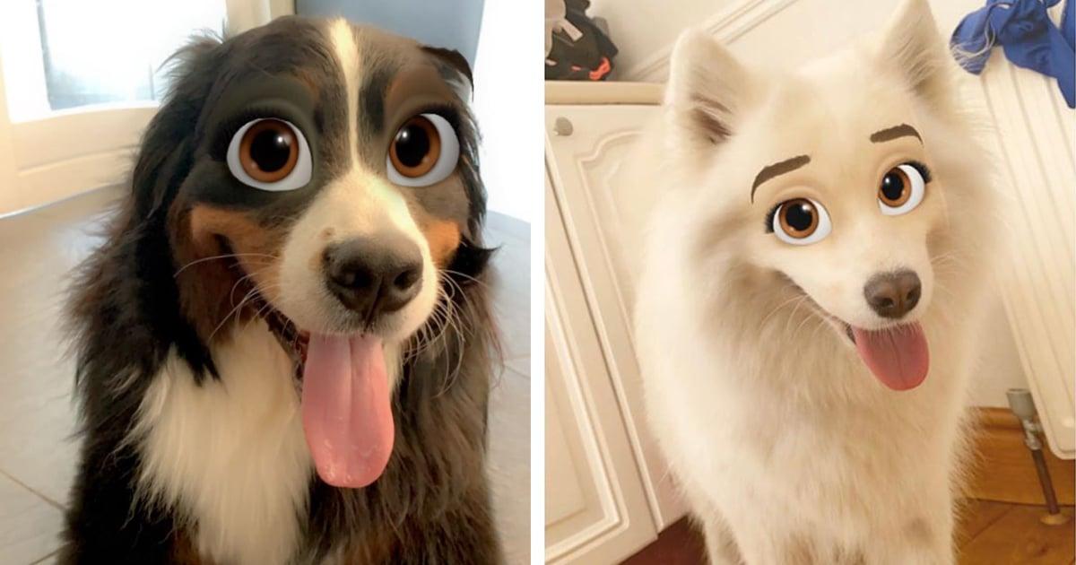 Ya puedes convertir a tu mascota en personaje de Disney