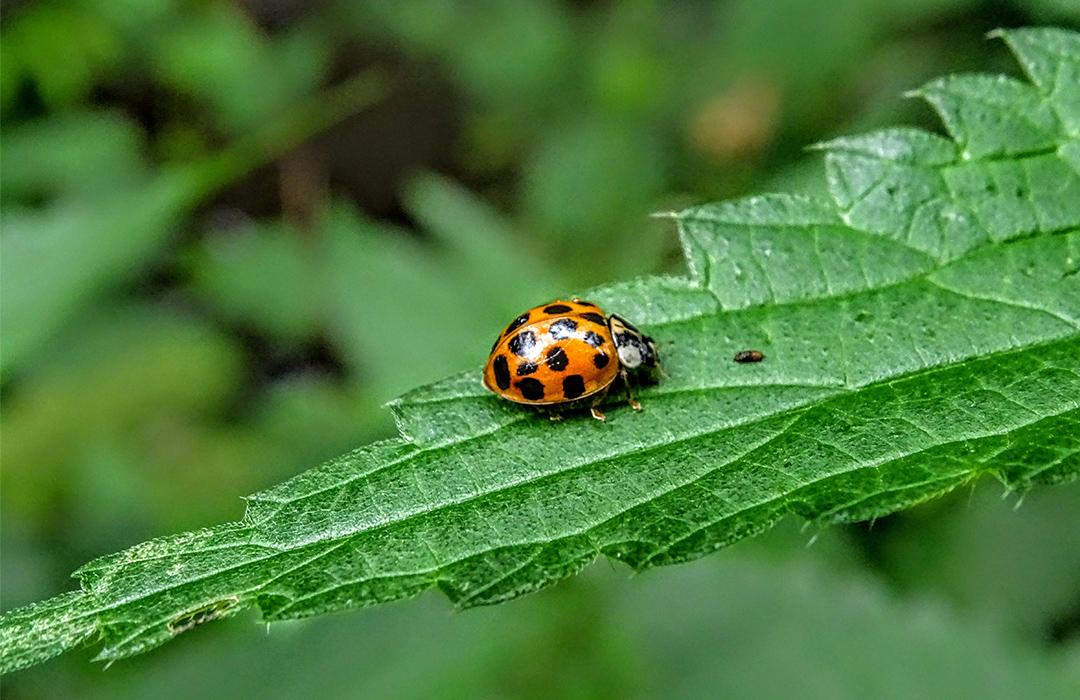 Pesticidas caseros para eliminar plagas en tu jardín