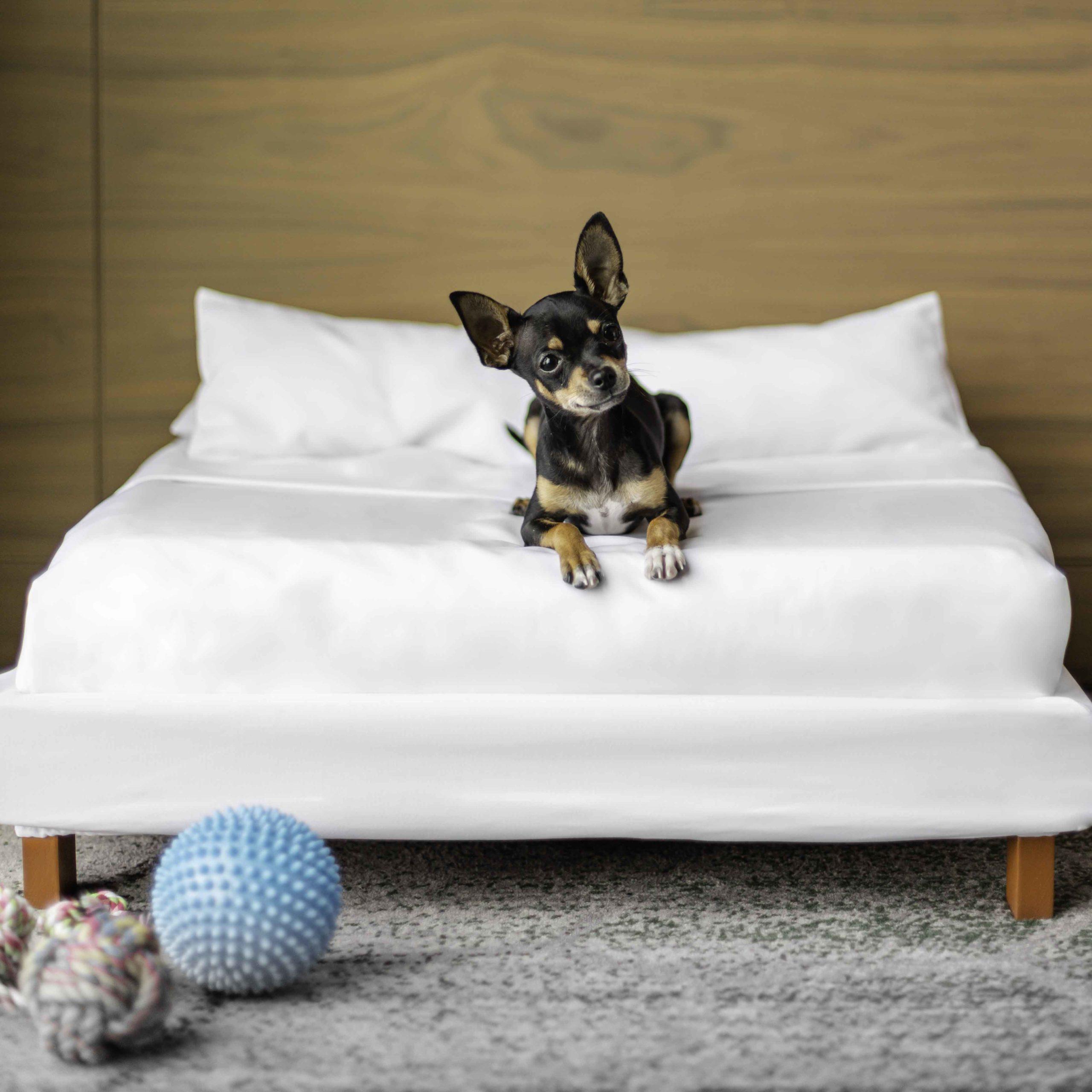 Este hotel en CDMX ofrece hospedaje de lujo para ti ¡y tu mascota!