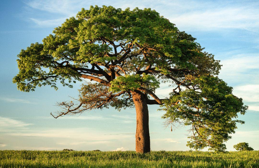 ¿Tienes fotografías de árboles? Entonces regístrate a este concurso y gana hasta 60 mil pesos