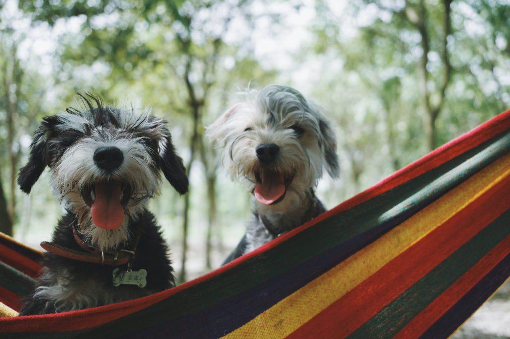 Las lecciones que los perros nos han enseñado en la pandemia