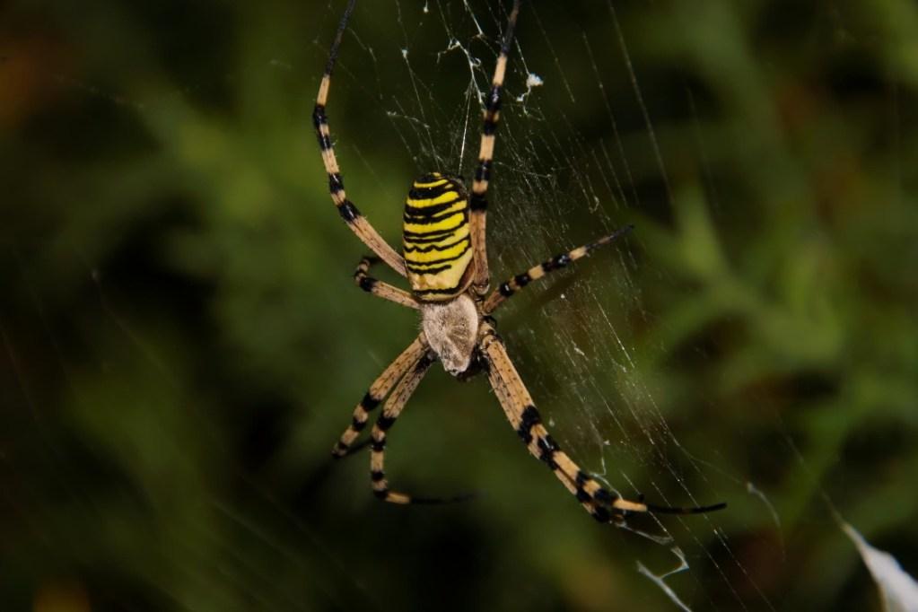 Cómo olvidarte de las arañas en tu casa para siempre
