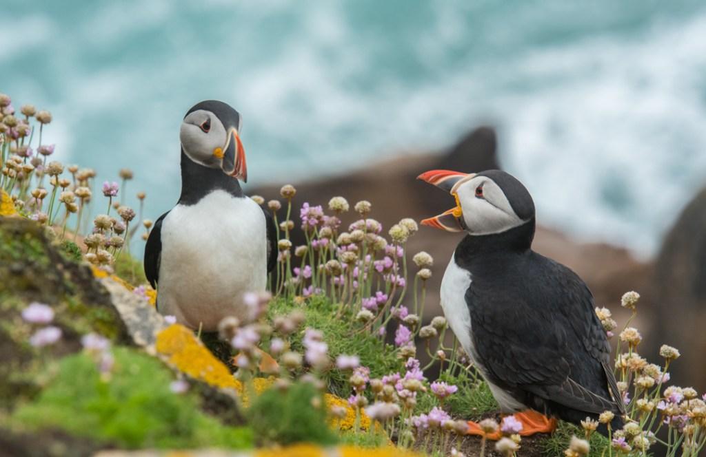 Día Mundial de los Animales: celebrando la biodiversidad en el mundo