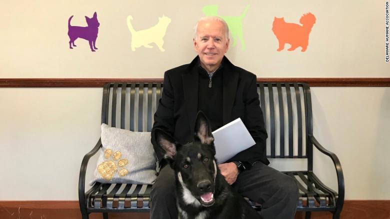 Él es Major, el primer perro rescatado que vive en la Casa Blanca gracias a Joe Biden