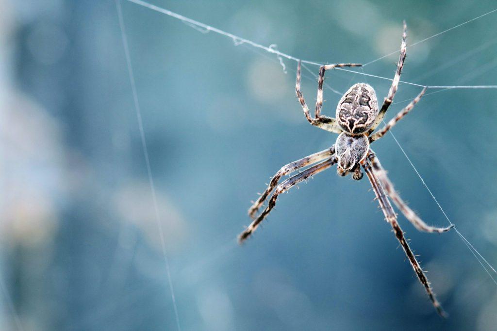 ¿Es la seda de araña más fuerte que el acero? ¡Aquí te lo contamos!