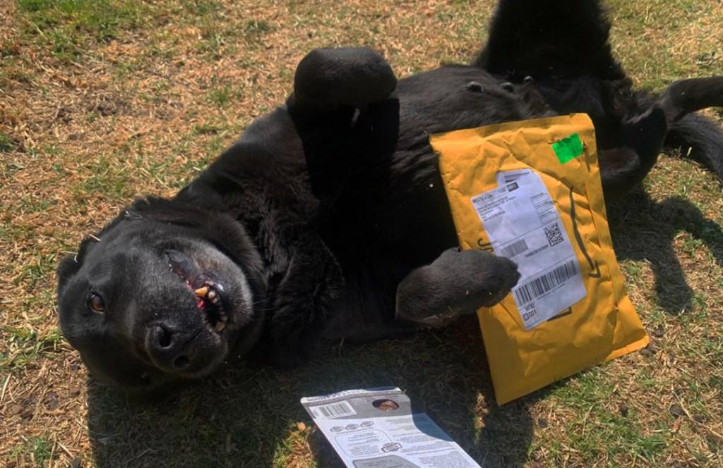 Ayuda a los perritos rescatados del metro con esta Wishlist de Amazon