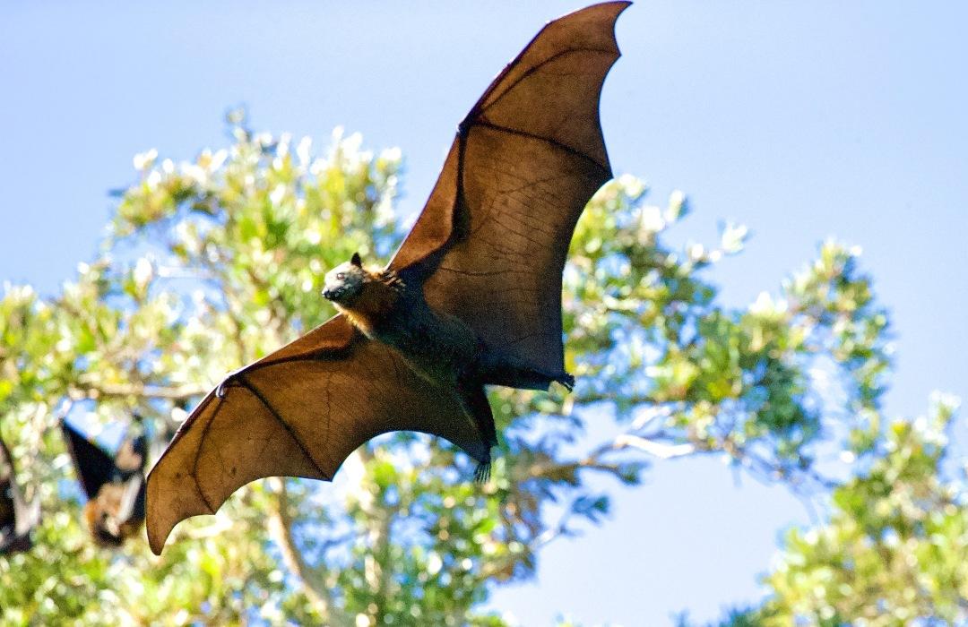 "Descubren que los murciélagos aman ""conversar"" sobre sexo y comida"